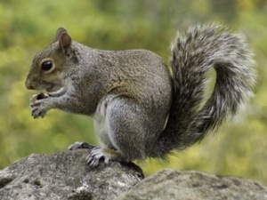 animal-close-up-fur-47359